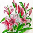 Pink lilies, painting — Stock Photo