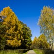 Road in autumn forest — Stock Photo #10666239