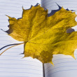 Stock Photo: Yellow maple leaf on notebook