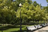 Avenida de parque — Foto de Stock