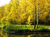 秋の風景 — ストック写真