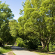 Willow trees near lake, park — Stock Photo #9846121