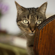 Young male cat — Stock Photo #10583320