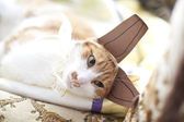 Funny ginger cat wearing fake rabbit ears — Stock Photo