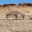 Stock Photo: Colony of swallows, Active Sand Martin breeding colony