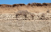 Colony of swallows, Active Sand Martin breeding colony — Stock Photo