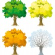 Tree at four seasons - Stock Vector