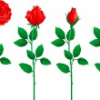 Set of red roses — Stock Vector