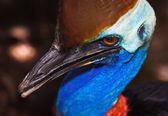 Um retrato do perfil da enorme ave que não voa — Foto Stock