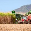 Sugar cane harvest — Stock Photo