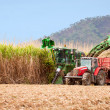 Stock Photo: Sugar cane harvest