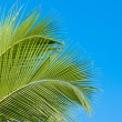 Palm tree fronds — Stock Photo