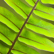 Beautiful lush fern frond — Stock Photo