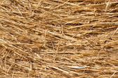 Close-up of dry hay — Stock Photo