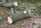 木製の丸太 — ストック写真