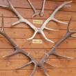 Deer antlers — Stock Photo #10208213