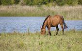 Cavalos de esboço — Fotografia Stock