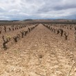 Wineyard in La Rioja, Spain — Stock Photo