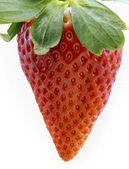 Single fresh red strawberry — Stock Photo