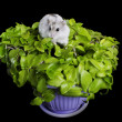 Stock Photo: Hamster on plant