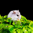 Hamster on a plant — Stock Photo #10393075