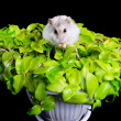 Hamster on a plant - Stock Photo
