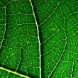 Leaf texture — Stock Photo