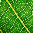 Leaf texture — Stock Photo #10036904
