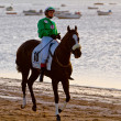 Horse race on Sanlucar of Barrameda, Spain, August 2011 — 图库照片 #8065442