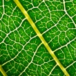 Leaf texture — Stock Photo #8706616