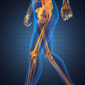 Human radiography scan — Stock Photo