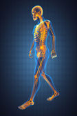 Walking man radiography — Foto de Stock
