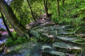 Hdr di un sentiero nel bosco — Foto Stock