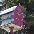 Large Bird House - Stock Photo