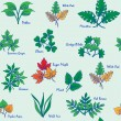 Stock Vector: Hand Drawn Seamless Leaves Icons