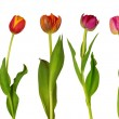 Colorful tulips — Stock Photo #10130436
