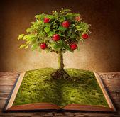 Kniha poznání — Stock fotografie