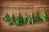 Ervas frescas — Foto Stock