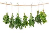 čerstvé bylinky — Stock fotografie