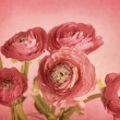 Ranunculus — Stock Photo #9725048