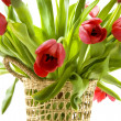 Tulips from Holland - Stock Photo