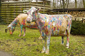 Painted cows — Stock Photo