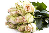 Lovely roses — Stock Photo