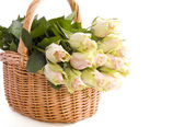 Basket roses — Stock Photo