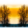 The bare trees in winter park. - Stock Photo
