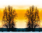 The bare trees in winter park. — Stock Photo