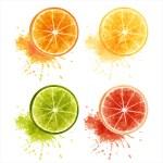 Постер, плакат: Citrus fruits