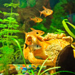 Aquarium fishes of different species — Stock Photo #8195764