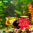 Aquarium with plants and fish — Stock Photo #8737464