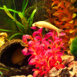Aquarium with plants and fish — Stock Photo #8737517